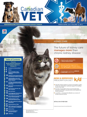 How to build a strong visual brand for your veterinary practice
