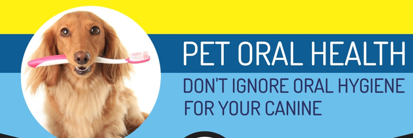 Veterinary Infographics - Pet Oral Health