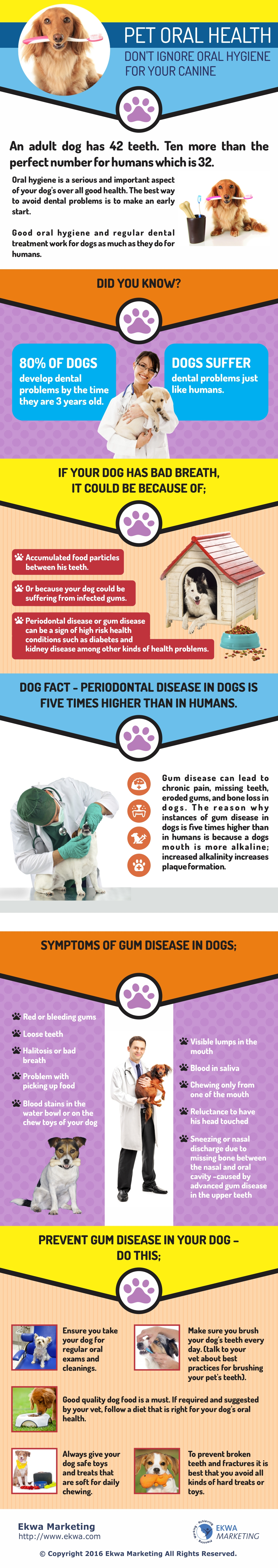 Veterinary Info Graphics, Pet Oral Health
