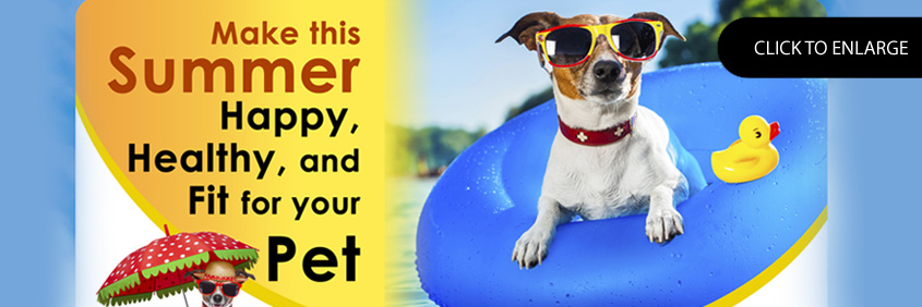 Make this Summer Happy, Healthy and fit for your pet