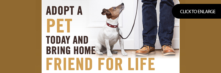 Adopt a pet today and bring home friend for life