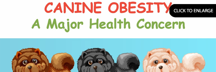 Canine Obesity A Major Health Concern