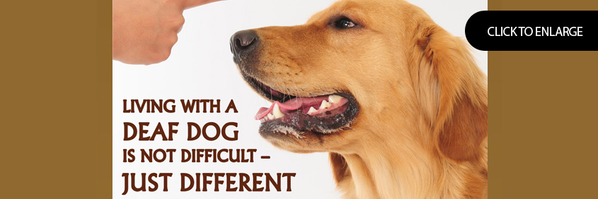 Living with a deaf dog is not difficult - just different
