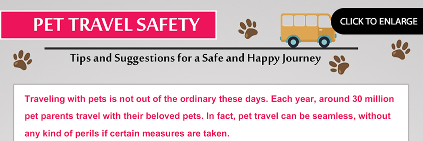 Pet Travel Safety – Tips and suggestions