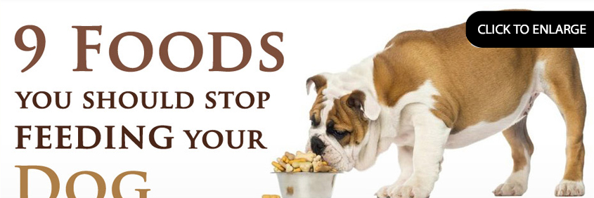 9 foods you should stop feeding your dog now
